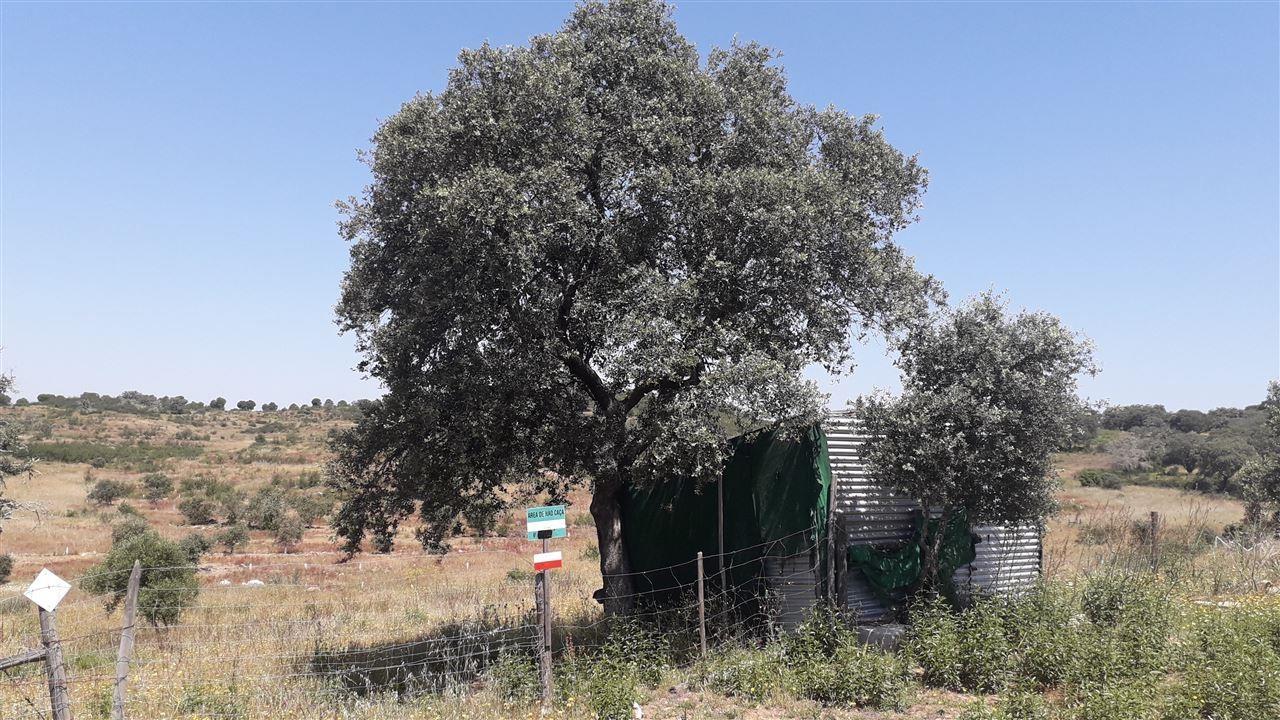 Terreno Rústico para comprar - Algarve, , Mértola